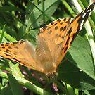 Lady butterfly by loiteke