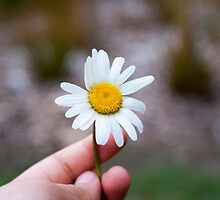 Just Take the Flower by palmea1
