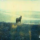 Wild Black Horse by MoiMM