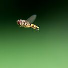 Hoverfly in Morning Light by Sarah-fiona Helme