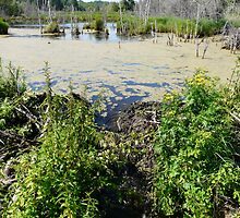Draining the Beaver Pond by MaeBelle