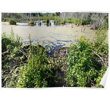 Draining the Beaver Pond Poster