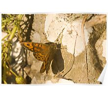 Wall Brown Butterfly Poster