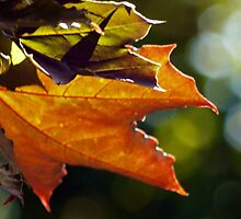 Windy leaves by Ms-Bexy