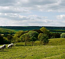Peaceful Countryside by Ms-Bexy