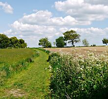 West Sussex countryside by Ms-Bexy