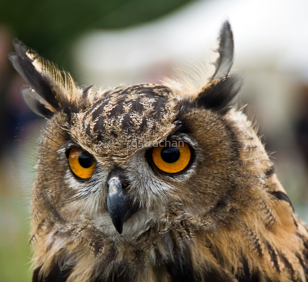 Young Eagle Owl by rgstrachan
