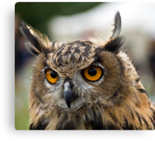 Young Eagle Owl Canvas Print