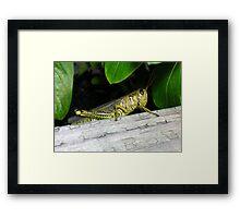 Green Grasshopper Framed Print