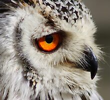Owly eyes by Mark Mitrofaniuk