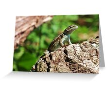 Lizard on a log Greeting Card