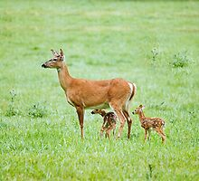 momma deer with two fawns by RosiesPhotos