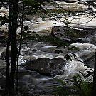 Brooks Falls  by Joanne  Bradley