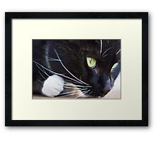 its the eye of the wanna be tiger Framed Print