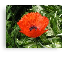 Amongst the green there is a Red Poppy Canvas Print