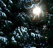 Sun Even In Winter by starlitewonder