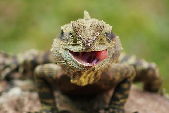 Dragon by Rochelle Buckley