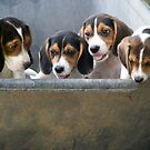 Puppies, I WANT ONE!!! by BCallahan