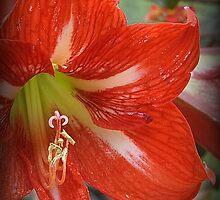 Red Trumpet by Gwyn Lockett