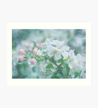 Cherry Blossom Fine Art Print Art Print