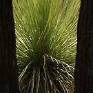 Grasstree by Darryl Beer