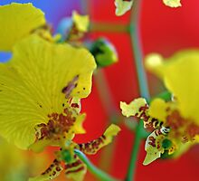 George Ramsay Orchids by Renee Hubbard Fine Art Photography