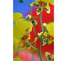 George Ramsay Orchids Photographic Print