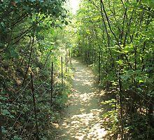Walden Trail by AntonLee