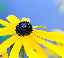 Yellow by titus