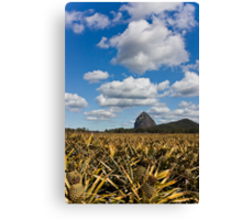 A Fruity Perspective Canvas Print
