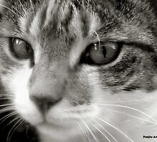 Cross eyed beauty by patjila