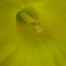 Daffodil Smile by Dawn Ostendorf