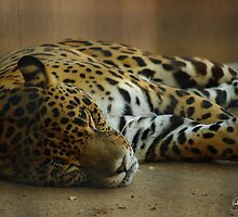 Time for a Snooze by Vicki Pelham