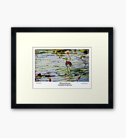 Limited Edition Prints - Avian Framed Print