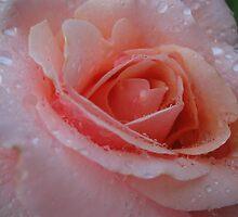 Pink Dew by Dawn by Dawn Ostendorf