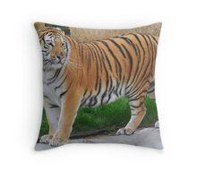 Tiger - Noah's Ark Zoo Farm, Nr Bristol,UK Throw Pillow