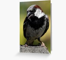 House Sparrow Up Close Greeting Card