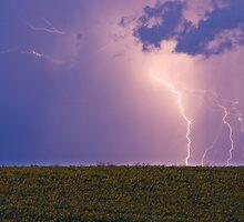 Sunflower Lightning Field by Bo Insogna