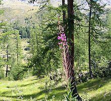 Bois Garnier  by daffodil