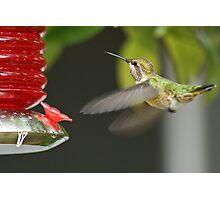 Feeding Hummingbird Photographic Print