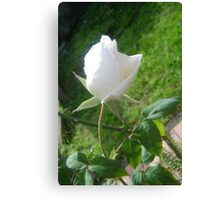 Lonely Lily Like Rosebud Canvas Print