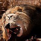 Male Lion Devouring Meal by RatManDude