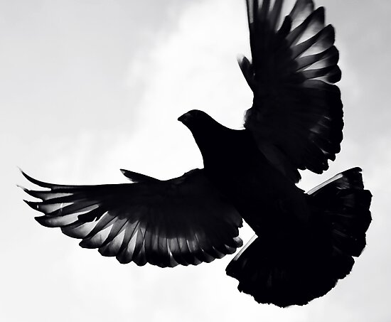 Pigeon silhouette ... by SNAPPYDAVE