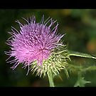 Weeds Can Be Beautiful Too! by Bridges