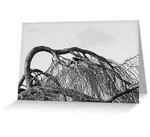 Crow within the Tangle Greeting Card