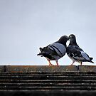 lovebirds ... by SNAPPYDAVE