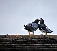 lovebirds ... by SNAPPYDAVE
