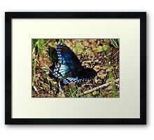 Brush-footed Butterfly Framed Print