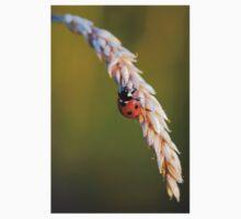 Ladybird on Grass Kids Clothes