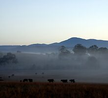 Yarra Valley Morning by Clare McClelland
